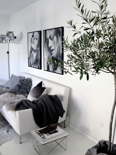 olivo en sala de estar
