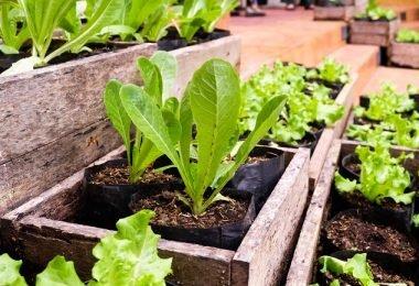 Como cultivar en un patio pequeño para tener siempre alimento