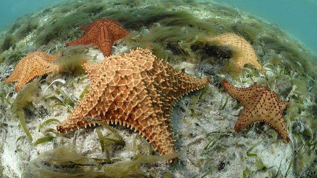 Vida marina en el archipielago