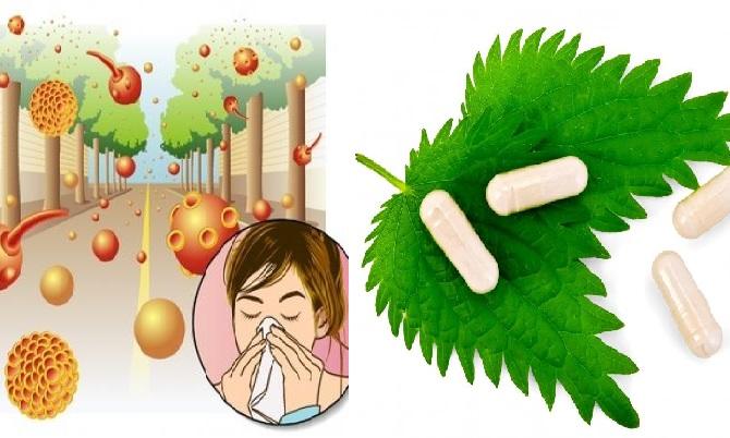 Los mejores antihistamínicos naturales para disminuir alergias