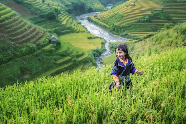 Campo de arroz en Laos