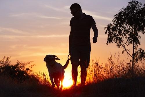 Perro y su amo caminando juntos viendo el atardecer