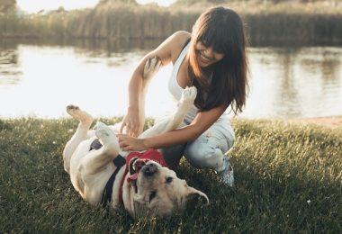 jugando con perro mascota