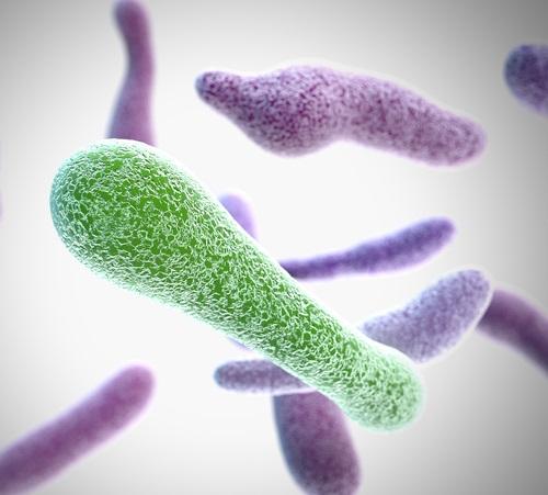 bacterias en las verduras pueden intoxicarte