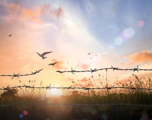 perder el miedo a vivir para conseguir la libertad