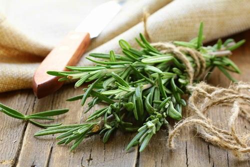 Aceite de romero usado para fortalecer el cuero cabelludo