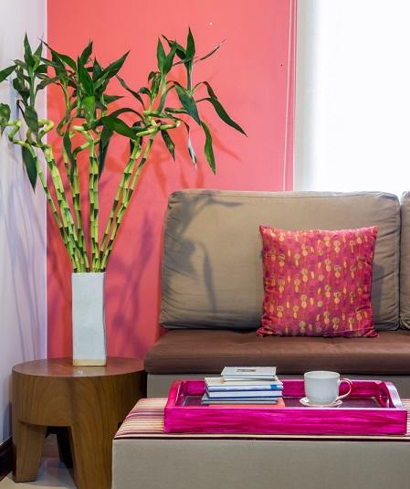energía positiva con plantas bambú de la suerte