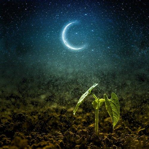 fases lunares y su influencia en la agricultura 2