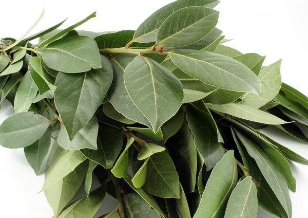Las hojas de laurel y sus efectos tranquilizantes en el cuerpo