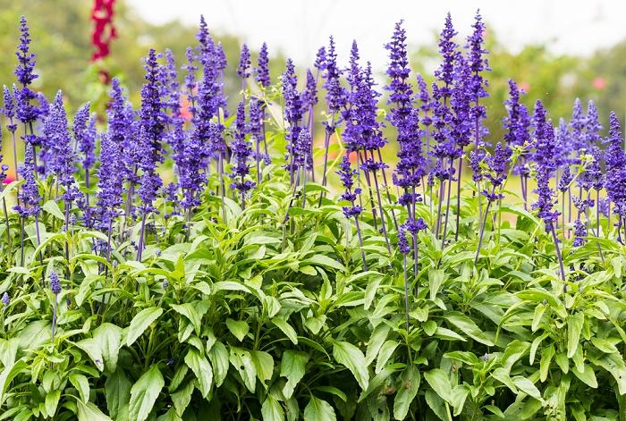 5 plantas de olor para un jard n peque o y aromatico for Plantas que hay en un vivero