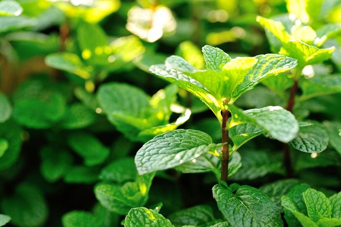 5 plantas de olor para un jard n peque o y aromatico - Plantas de jardin fotos ...