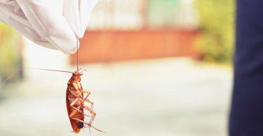 repeler-cucarachas
