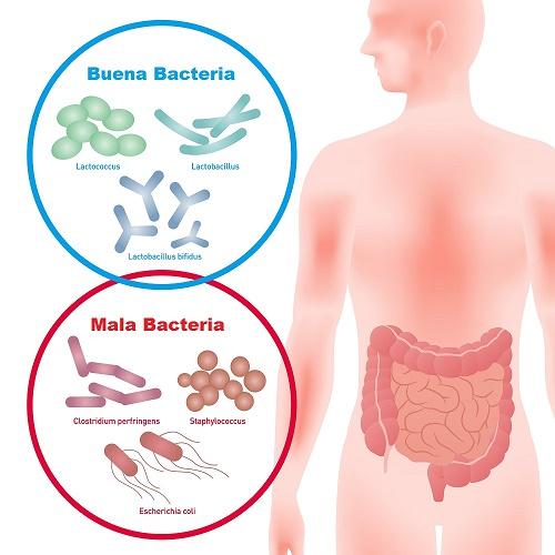 panza-hinchada-buena-y-mala-bacteria-intestinal