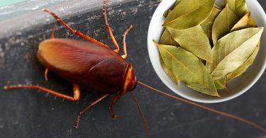 ahuyenta-las-cucarachas-de-manera-natural-1