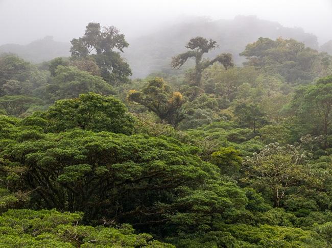 bosque-nublado-monteverde