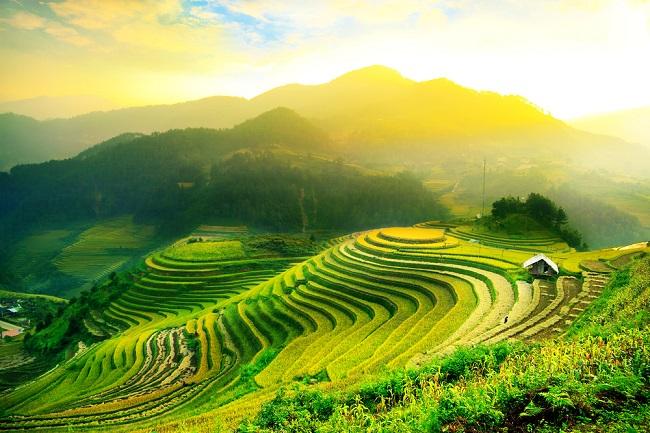 campos-de-arroz