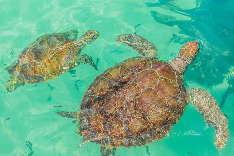 Playa Tortugas en Cancún