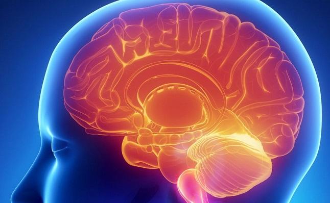 nutrientes en el huevo mejoran cerebro