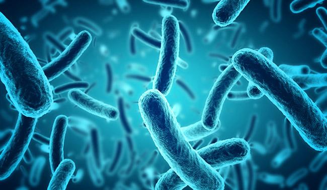 Bacterias en alimentos contaminados que causan problemas de salud