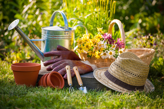 Alimentos fáciles de sembrar en un huerto casero