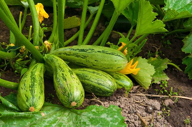 5 Cultivos Fáciles Para Empezar Un Huerto En Casa
