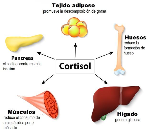desbalance de hormonas cortisol