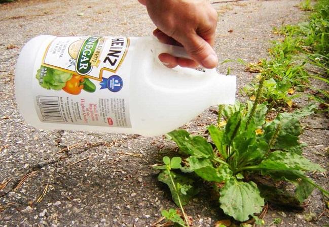 usar vinagre para el jardín,eliminar malas hierbas