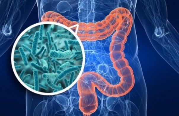 Ilustración de la flora intestinal y el uso de los prebióticos