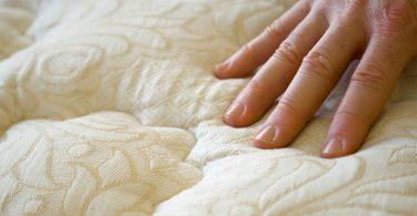 insectos que habitan entre las sábanas