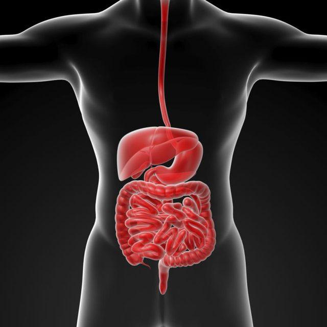 Imagen del sistema digestivo en el hombre