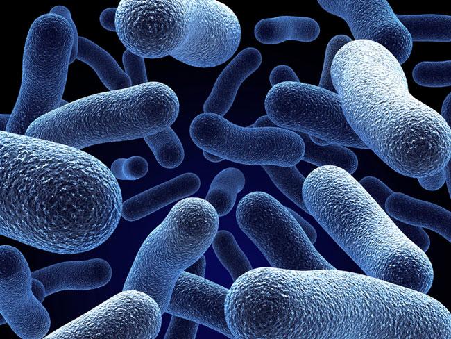 Campylobacter germen presente en la bañera