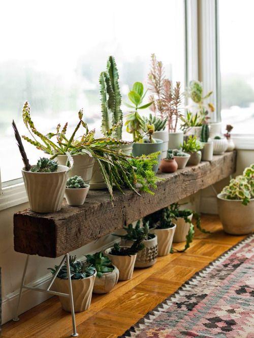 Adornando la ventana con plantas de interior