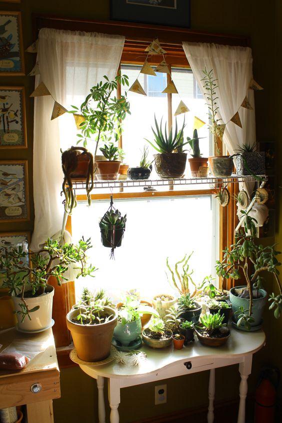 plantas en la sala