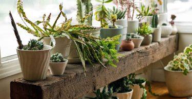 Decoración de forma ecológica con plantas y vegetales