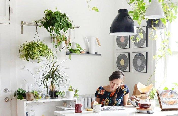 8 plantas para decorar la cocina que dar n productividad for Casas decoradas con plantas de interior
