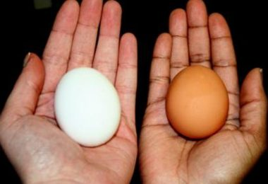 son más nutritivos los huevos marrones o los huevos blancos
