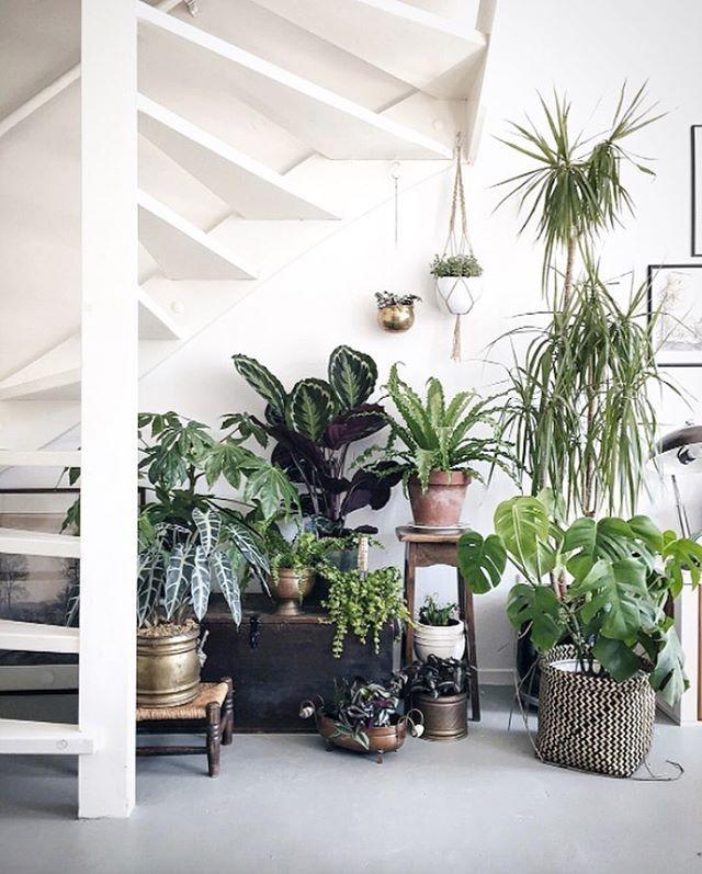 hermoso jardín con macetas debajo de la escalera interior