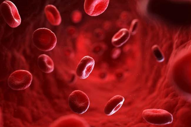 alimentos que ayudan a aumentar las plaquetas en sangre
