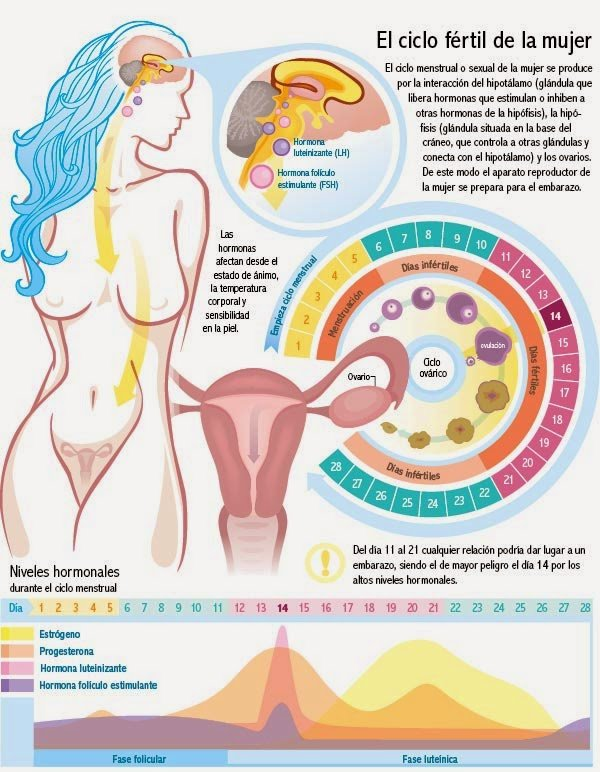 premenopausia ciclo fertil de la mujer