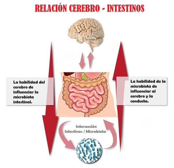 segundo cerebro interacción