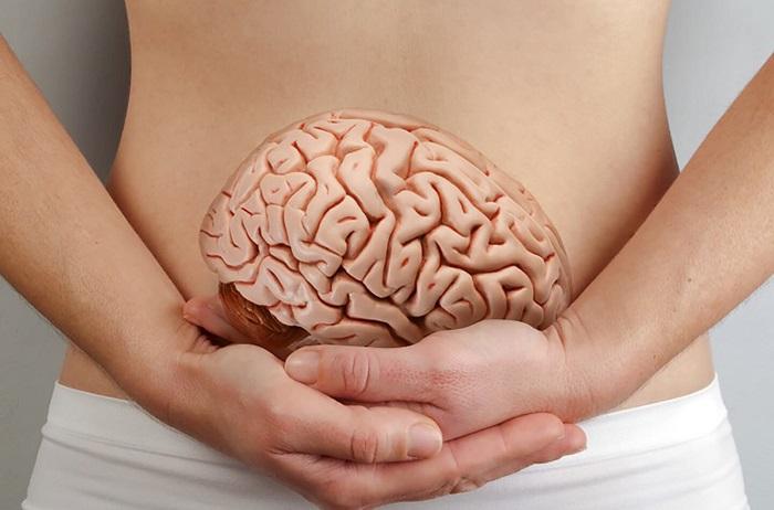 segundo cerebro
