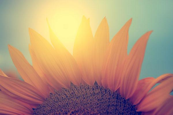 una flor en el sol