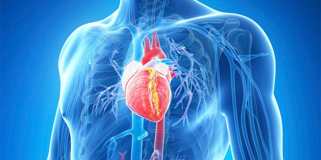 un sistema circulatorio más saludable