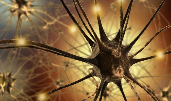 neuronas conexiones más eficientes en el cerebro