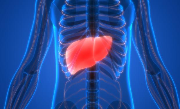 hígado agrandado por mal funcionamiento y la presencia de toxinas