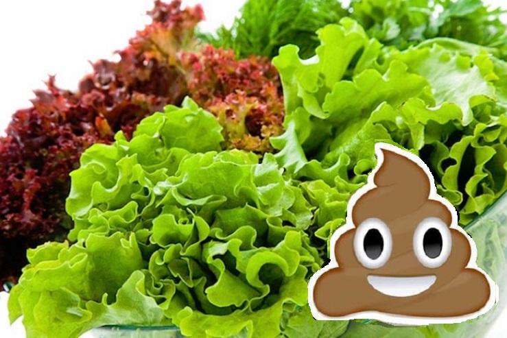 comiendo heces en vegetales verdes
