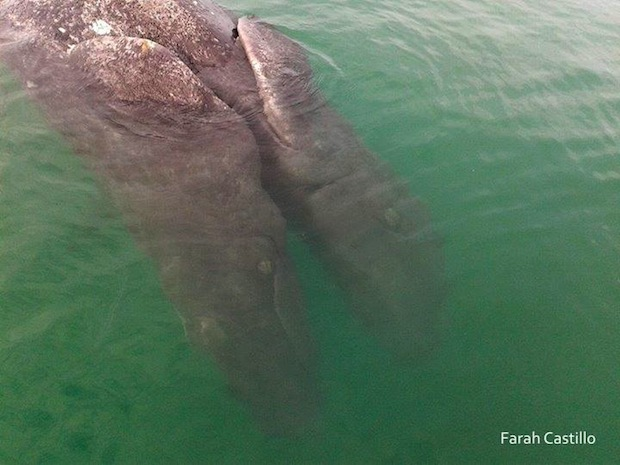 monstruo marino ballenas unidas