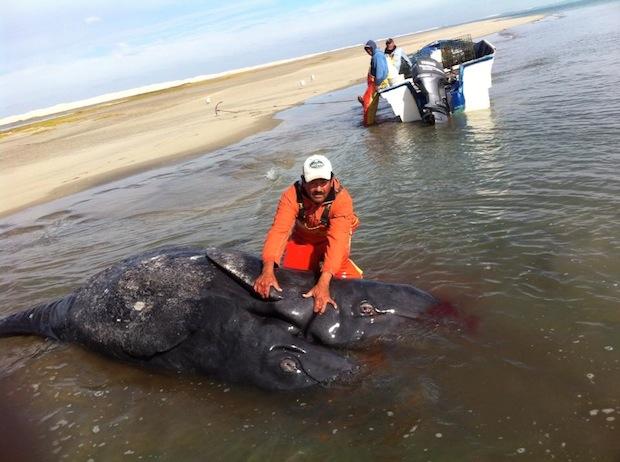 monstruo marino son ballenas unidas