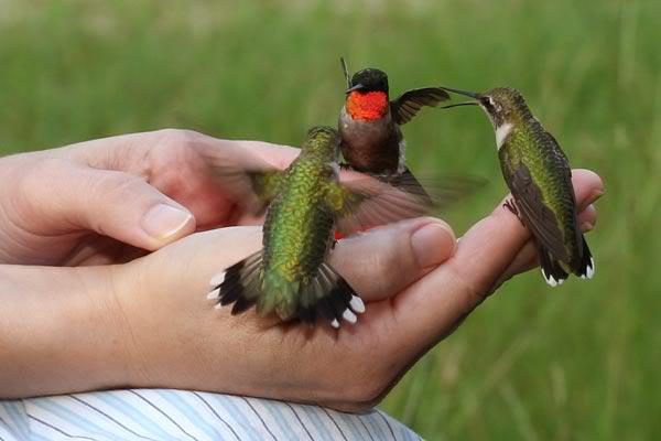 mensajes espirituales de ver colibríes