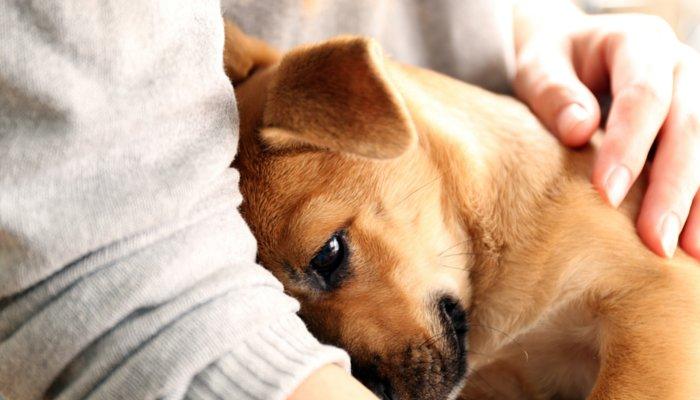 perros humanos